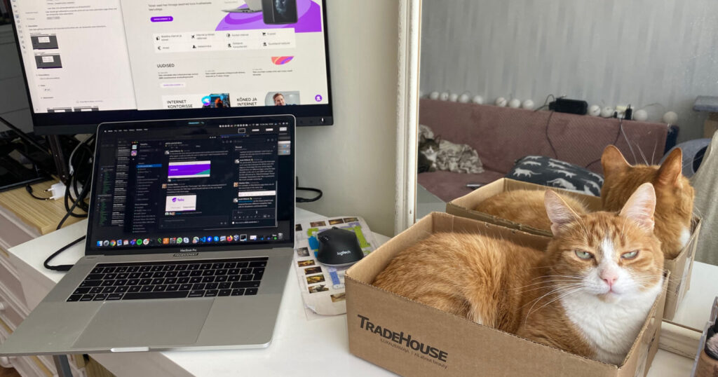 Proekspert remote work diary. Cat and setup